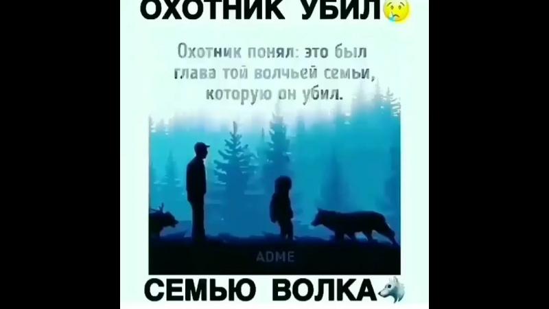 Охотник убил волчицу с волчатами