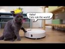 Mi Robot Vacuum Pets Best Friend