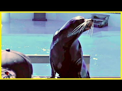 OKC ZOO SEA LION SHOW