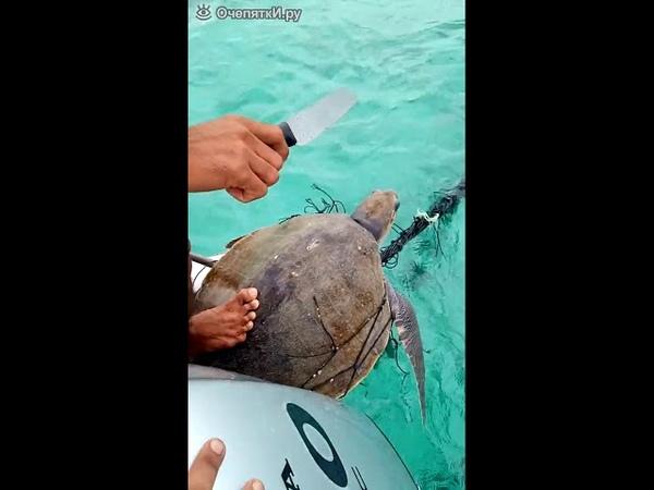 Спасение морских черепах