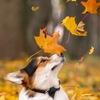 Собака - частичка моего сердца