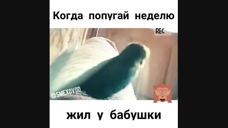Попугай был у бабушки
