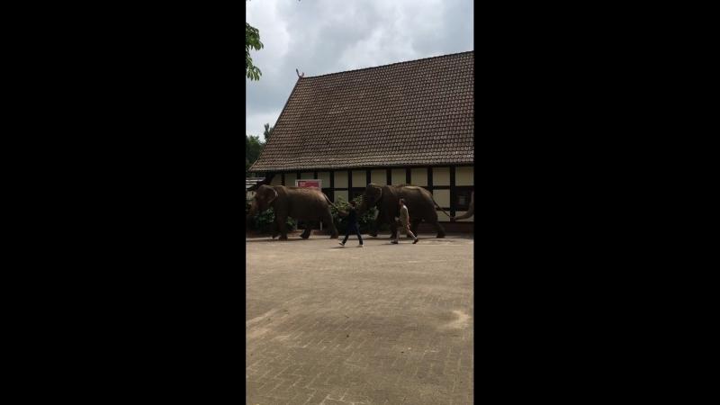 По улице Слонов водили ...