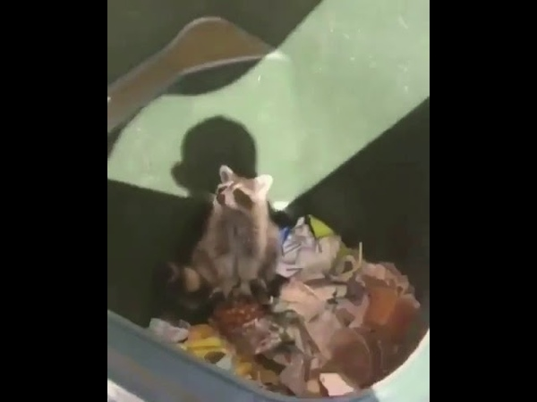 Yuh its a raccoon