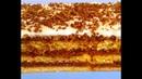 Потрясающий десерт за 5 минут | На скорую руку | Без выпечки | Cake in 5 minutes