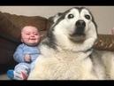 Дети и животные🐶 Самое смешное и милое видео 😆