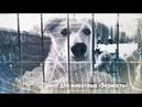 (41) Экс-сварщик с приютом для собак | ЧЕЛОВЕК НА КАРТЕ - YouTube
