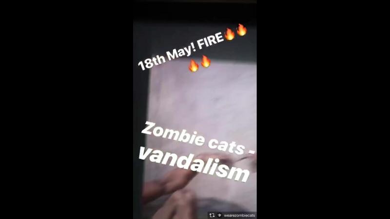 Zombie Cats - Vandalism (insta stories 02)