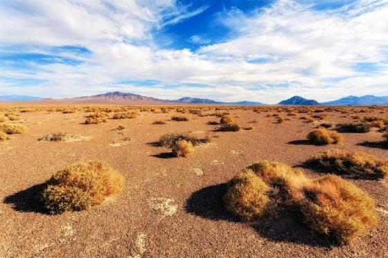 Что такое степь и кто там живёт Для слова «степь» дотошные учёные насчитывают до 60 определений и ни одного общепринятого. Слишком уж разнообразен этот ландшафт. Степь бывает высокогорная,