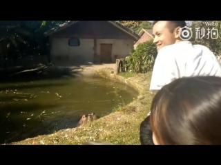 Chinese visitor throws a plastic bag filled with popcorn into a hippo's mouth