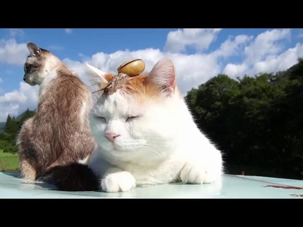 Большая улитка ползает по коту! Невозмутимый кот