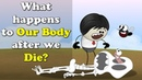 What happens to Our Body after we Die?   aumsum kids education