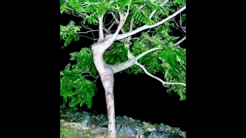 🔴 Its Interesting. Part 1. 🌳Beautiful Trees Of Unusual Shape