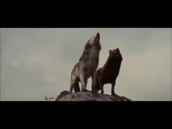 Клип волков ☺😑😍❤