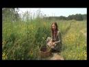 Лечебные травы: Как заготавливать?