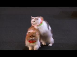 Дрессировщицы кошек наповал сразили судей шоу талантов
