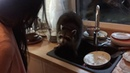 Raccoon washing dishes