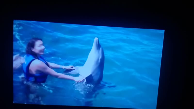 Синеглазые дельфины. Исп. Иванова Тамара.