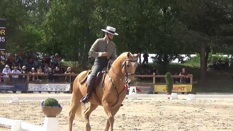 WAWE Weltmeisterschaft Working Equitation 2018 Dressage Test Vasco Godinho on Trigo