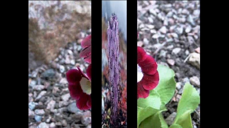 Долина Цветов, Гималаи.2MSWMM_0002