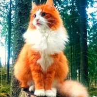 Иβάη ℳⓀ avatar