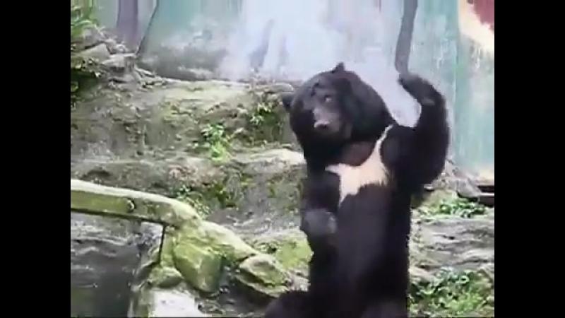 Кунг-фу мишка