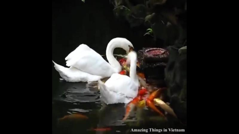 💖♍️🐟THIÊN NGA CHIA ĐỒ ĂN CHO CÁ THẬT LÀ... - Amazing Things in Vietnam