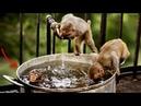 Смешные обезьяны Приколы про обезьян Funny monkeys 3 Cute And Funny Monkey Videos Compilation