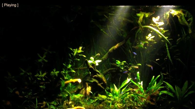 My South American (Amazon) Biotope Aquarium