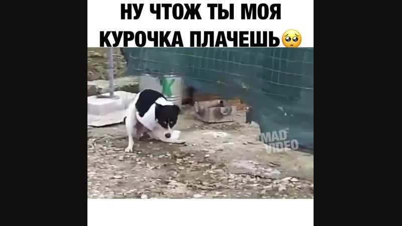 @mad_video ну чтож ты моя курочка плачешь?😂