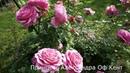 Роза Принцесс Александра Оф Кент - Princess Alexandra of Kent 2007