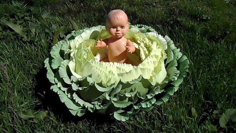 Капуста - гнездышко для фотосессии малышей