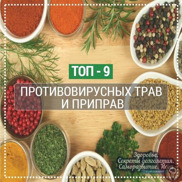 ТОП - 9 Противовирусных трав и приправ! Эхинацея Иммуностимулирующие свойства эхинацеи человек научился использовать себе во благо более 400 лет назад. Когда-то это растение применяли для