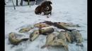 Такой зимней рыбалки я ещё не видел! Ловля карпа, клёвая рыбалка зимой!