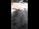 Тополиный снегопад.