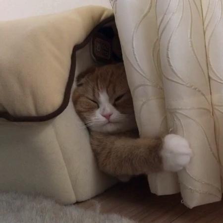 """🐰😸😽😺🐱💚❤️💛💜💙bunny 4cats on Instagram """"🎧🔛📣 Good night🐱🐾🏠. _ Enzou🐱 _ 🐾夜分にポスト 🐾えんちゃんも閉店😂 おやすみなさい _ catscuteamazing猫ねこfunnycatscottishfold..."""