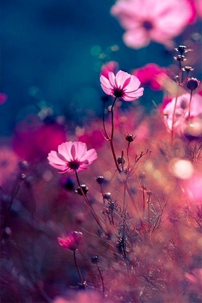 С добрым утром Очаровательные, Уникальные, Взбалмашные, Любящие, Нежные и Прекрасные!
