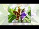 Ты сердишься рисуй бамбук Ты счастлив рисуй орхидеи
