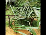 Паренёк построил пруд для разведения рыбы - vk.com/tricks_lf