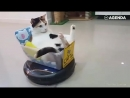 Кошки расслабляются