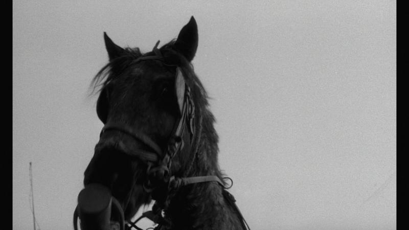 Opening scene from The Turin Horse Туринская лошадь A torinói ló 2011 реж Бела Тарр Агнеш Храницки