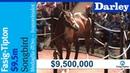 Medaglia d'Oro's Songbird brings $9.5M at Fasig-Tipton