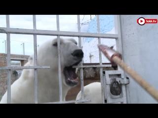 «Белые медведи», Алтын и Ариша