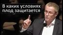 В каких условиях плод защитается Александр Шевченко