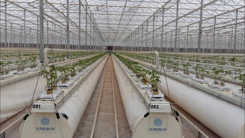 Промышленные теплицы Sundrop Farms Австралия