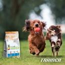 Пищевая непереносимость или гиперчувствительность у собак вызвана неспособностью усваивать…