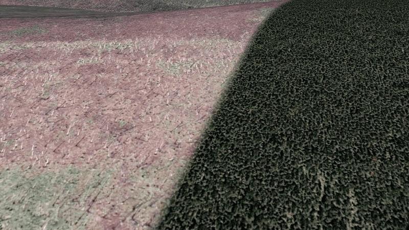 Гигантские территории погибшей тайги в России