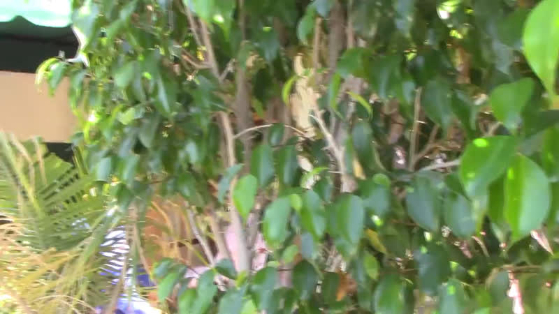 Video of Justin spotted out in California October 17