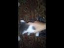 учим кота ебаться