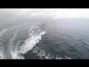 Северные дельфины Неописуемое зрелище Northern dolphins Indescribable sight
